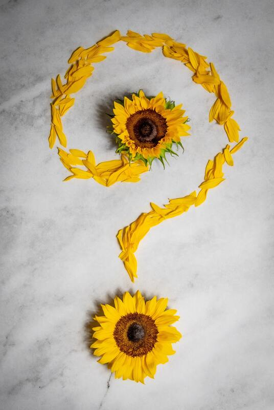 Sunflower blossoms and petals forming the shape of a question mark.Picture
